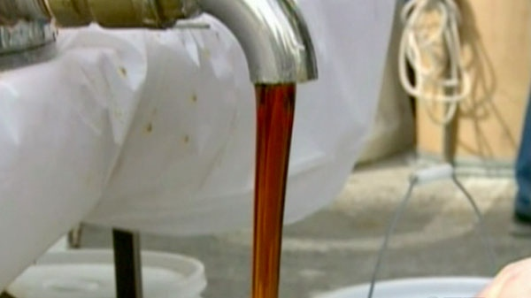Maple syrup may be loaded with lots of healthy compounds and antioxidants according to a new research.