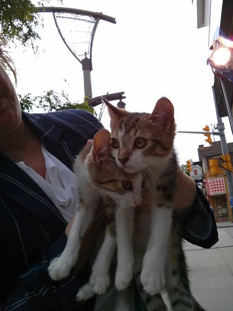 Pets of the Week Pauly and Paulo