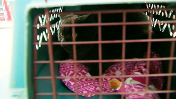 A cat is rescued after Condo evacuated after water pipe bursts.