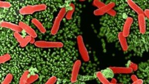 CTV National News: Doctors fighting superbugs