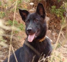Rescued dog Megan