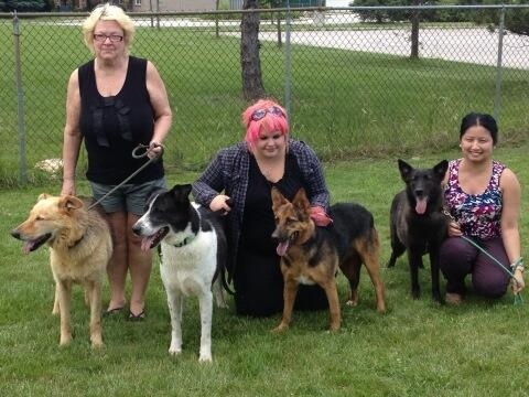 Four dogs from Lebanon stand with volunteers in Windsor, photo by For the Love of Paws Animal Rescue.