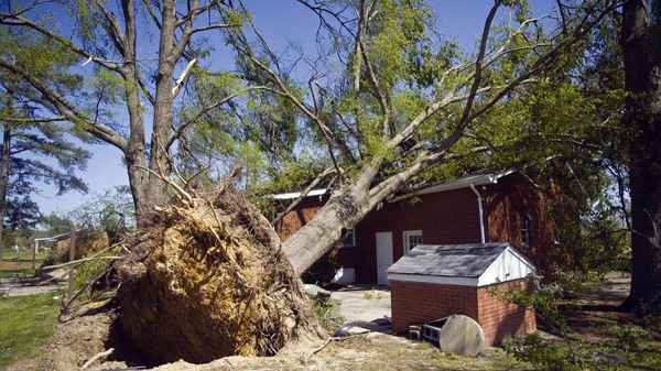 A large tree is seen up-rooted and laying on top of a house a day after a tornado hit the Saint Andrews community in Sanford, N.C., Sunday, April 17, 2011. (AP Photo/The Sanford Herald, Wesley Beeson)