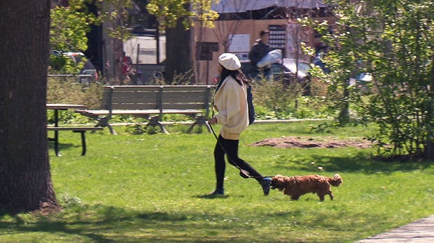 A woman walks her dog in Trinity Bellwoods Park.