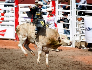Kody Lostroh, from LaSalle, Colorado, stays on Pop Evil to win the day's bull riding rodeo action at the Calgary Stampede in Calgary, Sunday, July 7, 2013. (Jeff McIntosh / THE CANADIAN PRESS)