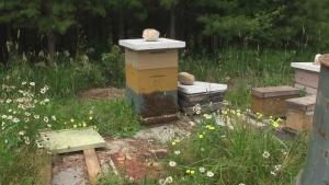 Bee Die Off