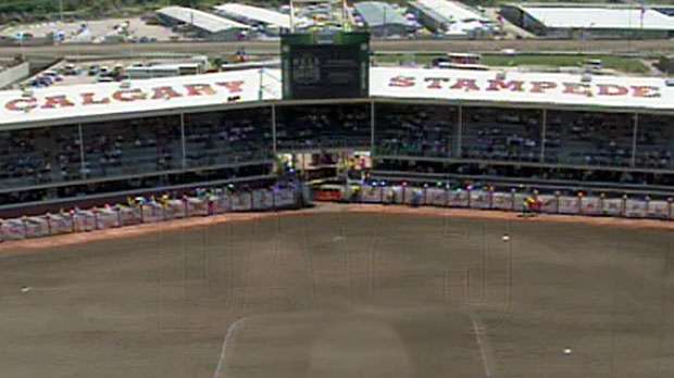 Steer euthanized, infield injury, Calgary Stampede