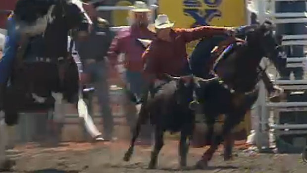 Veterinarians working with the Calgary Stampede made the decision on Wednesday to euthanize a steer that suffered critical injuries to its neck during the final round of the event.