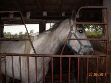 Horse from Tecumseh farm