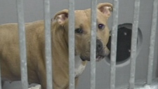 Peaches held at Animal Control