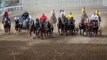Teams race to the finish line during Calgary Stampede chuckwagon races in this 2012 file phto. (Jeff McIntosh/THE CANADIAN PRESS)