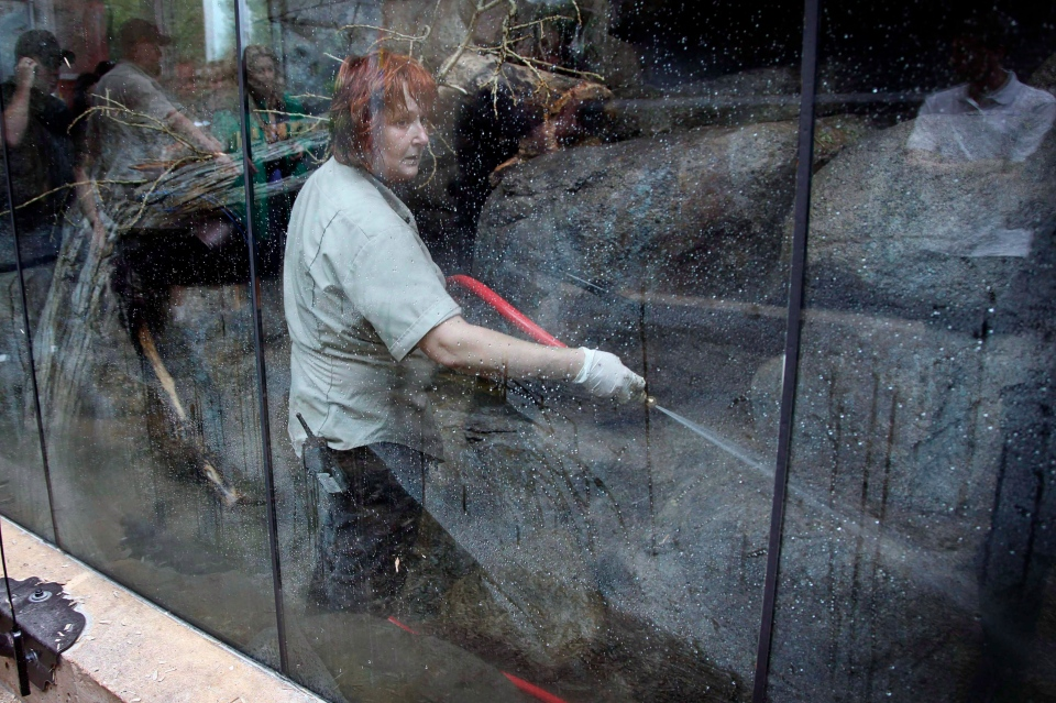 Zookeeper Kati Hrynewich hoses down an animal enclosure as clean-up crews work at the Calgary Zoo in Calgary, Alta., Tuesday, June 25, 2013. (THE CANADIAN PRESS/Jeff McIntosh)