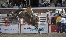 legendary Stampede bucking horse, Coconut Roll, St
