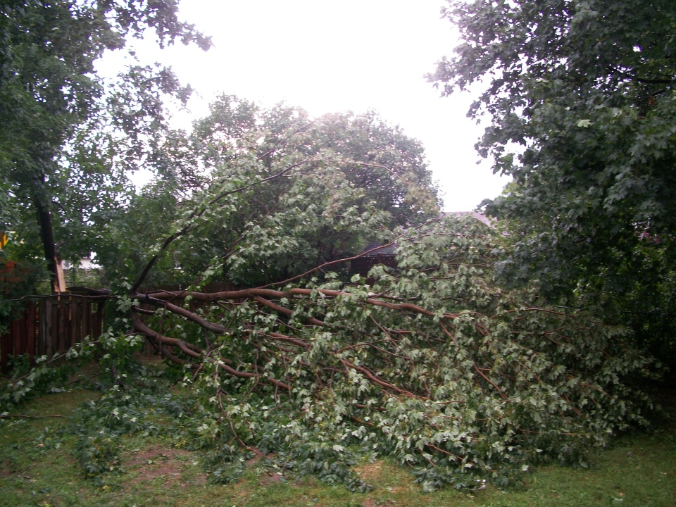 A storm knocked a tree down on a fence in Barrie, Ont., Friday, July 19, 2013. (Kirra Hamelin / MyNews.CTVNews.ca)
