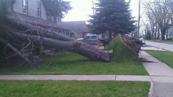 A CTV reader sent this picture of an uprooted tree after a wind storm pounded southern Ontario on Thursday, April 28, 2011.