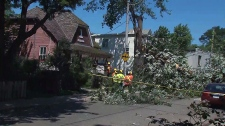 Toronto cleaning up after storm