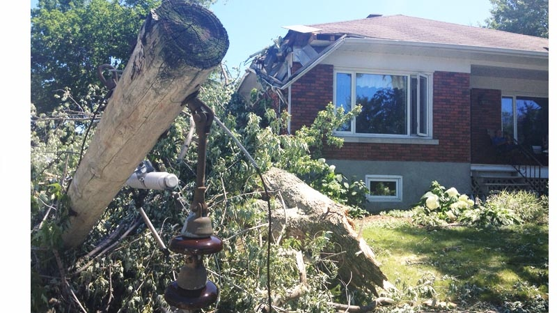 This tree, felled on Mont-Royal in Ste. Rose Laval, was one of many such trees toppled Friday. (CTV Montreal Kevin Gallagher July 21, 2013)