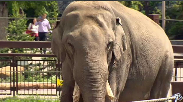 Calgary Zoo Begins First Phase Of Relocation Of Four