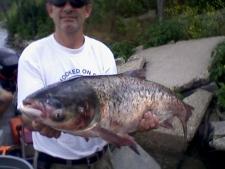 Asian Carp, Lake Calumet, Lake Michigan