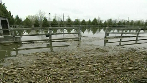 Hundreds of residents living in the Montergie have been forced to leave their homes because of ongoing flooding in the region. (Tuesday, May 3, 2011)
