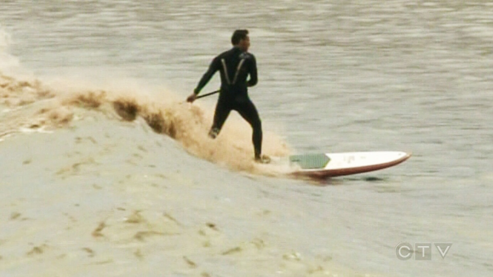 Surfers are flocking to New Brunswick to ride a single tidal bore on the Petitcodiac River.