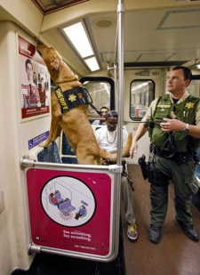 Los Angeles Sheriff's Bomb K-9 Threat Interdiction Unit handler, Kiley Hayden and his dog 'XXZYLO' sniffs a subway train at Los Angeles Union Station, Monday, May 2, 2011. Hours after the announcement that terrorist Osama bin Laden had been killed, security was heightened in many areas that could be considered potential targets for terrorist attacks. (AP / Damian Dovarganes)