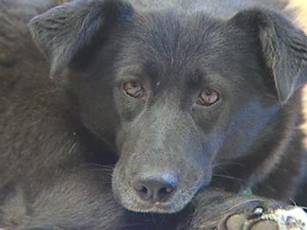 Regina Humane Society says Saskatchewan's animal protection