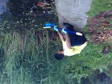 Hundreds of dead fish found in Grenadier Pond