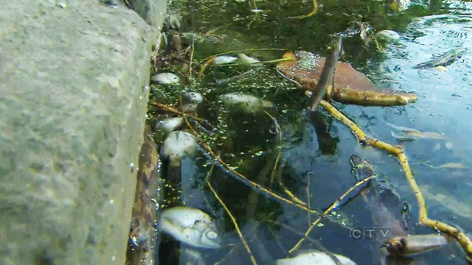 Hundreds of dead fish found floating in High Park