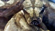 Python kills two young New Brunswick