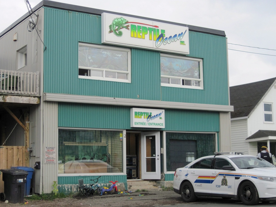 Royal Canadian Mounted Police work at the scene of a fatal python attack at Reptile Ocean exotic pet store in Campbellton, N.B., on Monday, Aug. 5, 2013. (CP)