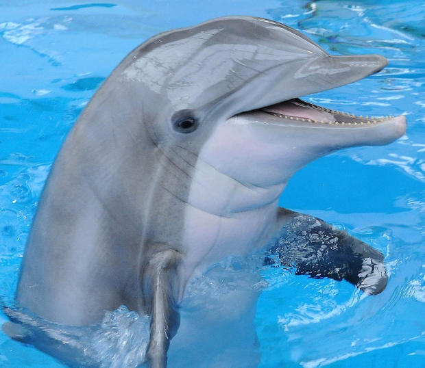 a study on the life of a dolphin Term cetacean research, defined here as studies lasting ≥ 10 years, has also  helped  key words: cetacea, dolphins, life history, longitudinal research,  marine.
