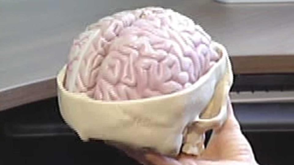 Brain model, brain generic