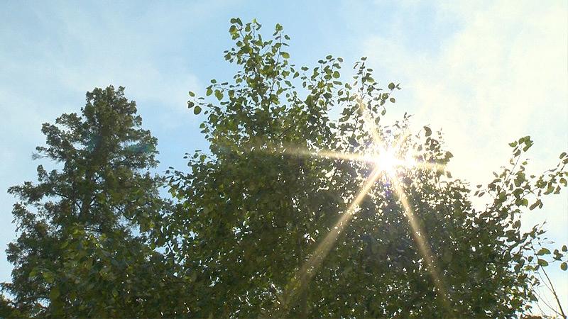 Edmonton sunlight generic