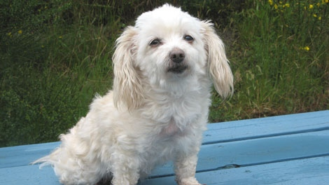 """Miracle May"" was dropped onto the grounds of a B.C. care home on May 2, 2011. (SPCA)"