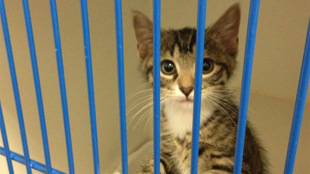 In July alone, 600 cats and kittens were brought into the Winnipeg Humane Society.
