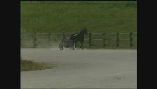 Horse racing industry