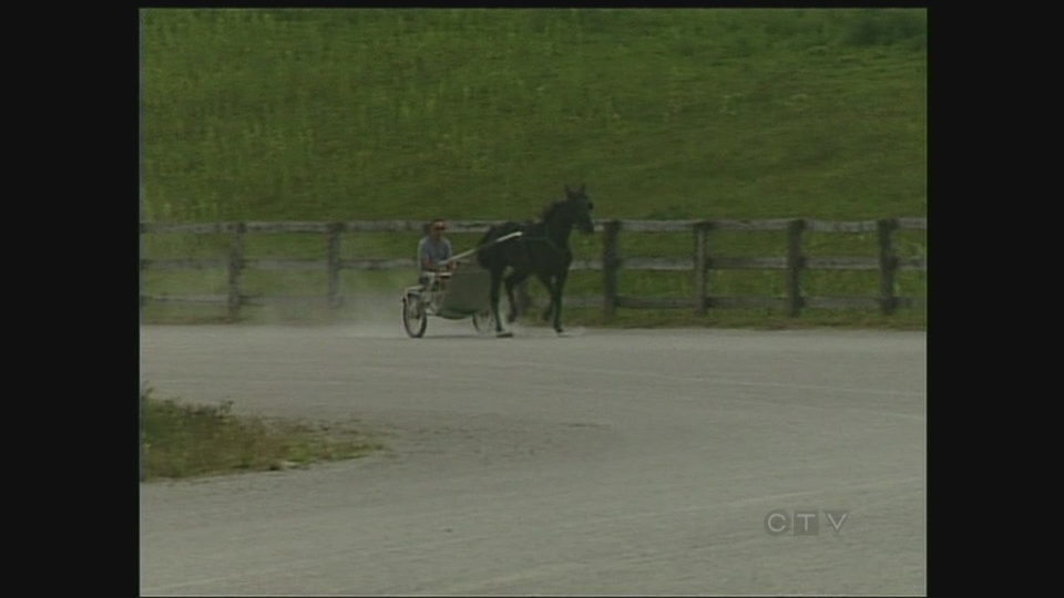 A horse circles the track at Libby Stables in London, Ont. on Friday, August 16, 2013.