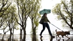A woman shields herself from rain under an umbrella while walking her dog along Toronto Lakeshore on Saturday, May 14, 2011. (Darren Calabrese / THE CANADIAN PRESS)