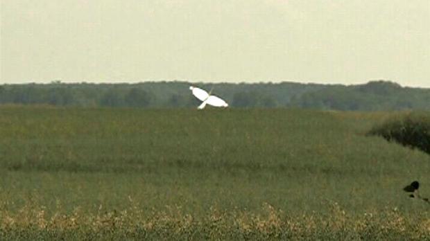 TSB: Engine failure caused fatal crop duster crash | CTV News Regina