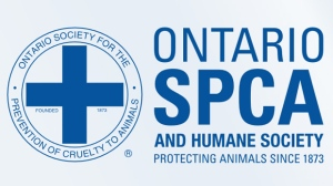 A Pembroke man has been accused of striking a dairy cow with an ice chopper, according to the Ontario SPCA.