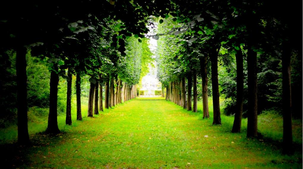 anwar_hope_forest