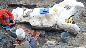 CTV News Channel: Unearthing a complete skeleton