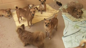 CTV BC: Dogs left outside 2 animal shelters