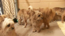Dogs dumped at Vancouver animal shelters