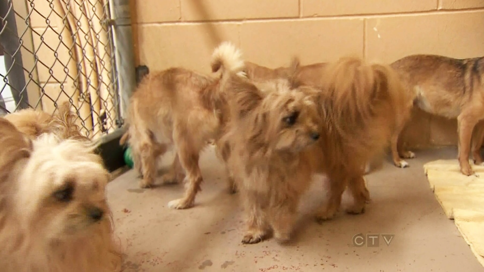 Two metro Vancouver animal shelters are dealing with 50 dogs that were left at two separate facilities overnight on  Aug. 30, 2013.