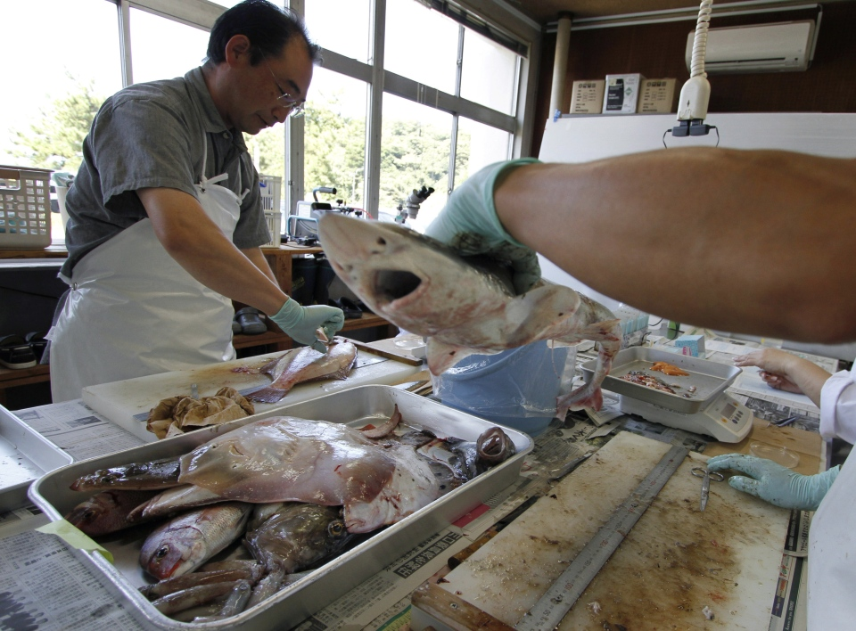 FILE - In this Aug. 26, 2013 file photo, laboratory workers at Fukushima Prefecture Fisheries Research Center dissect fish caught earlier in the day by local fishermen, before conducting radiation tests in Iwaki, about 40 kilometres south of the tsunami-crippled Fukushima Dai-ichi nuclear power plant, Japan. (AP / Koji Ueda, File)