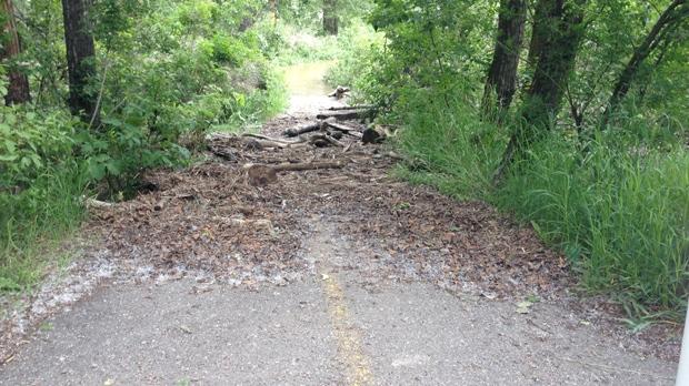 Pathway debris
