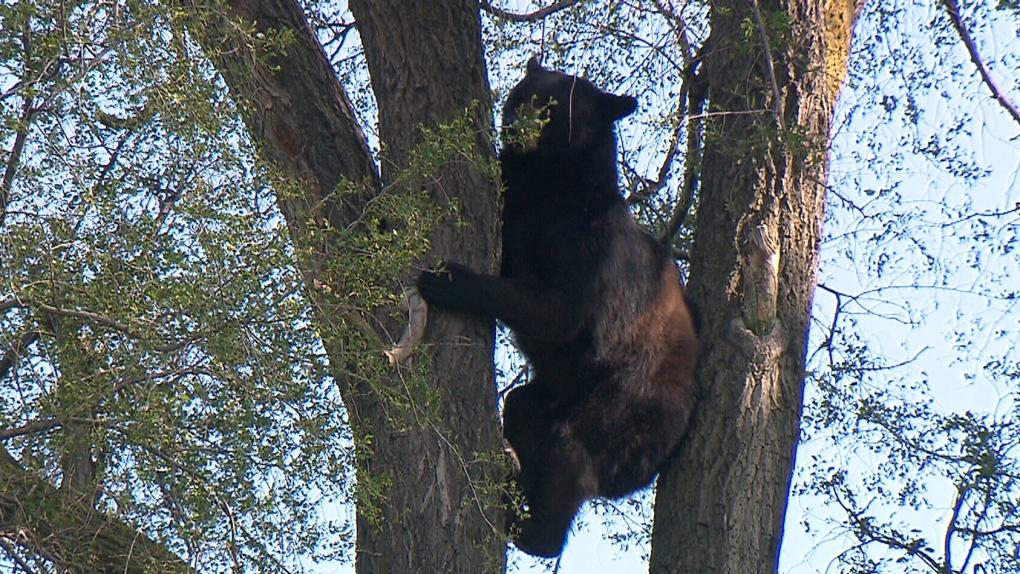 nuisance_bears
