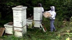 CTV Barrie: Bee deaths hit honey harvest